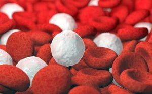 red and white blood cells, 3D illustration